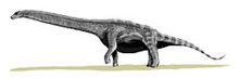 250px-Argentinosaurus BW