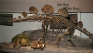 Mounted skeleton of Hesperosaurus mjosi