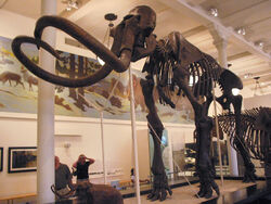 MAMMOTH Skeleton(1)