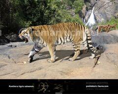Panthera-t-sol1-738x591.jpg
