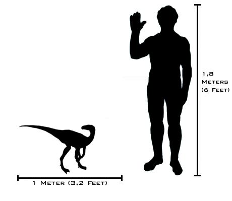 File:EoraptorSize.png