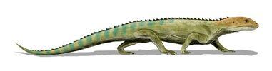 Mesosuchus BW
