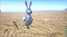 BunnyDodo