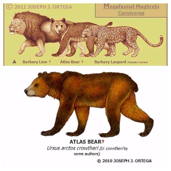 atlas bear dinopedia fandom powered by wikia