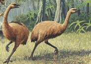 14 giant haasts eagle attacking new zealand moa 7