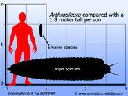 Arthropleura-size
