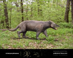 Arctocyon primaevus