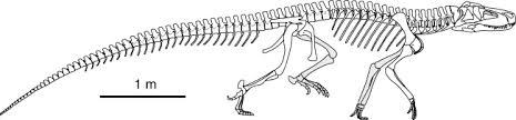 File:Rauisuchus.jpg