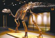 Hadrosaurus-Foulkii