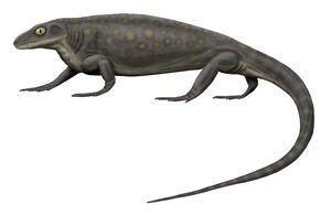 Aerosaurus greenleeorum