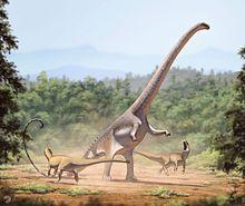 Barosaurus lentus1