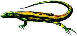 Hylonomus lyelli