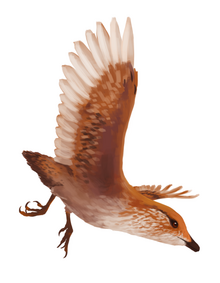 Abavornis