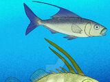 Nardoichthys