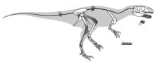 220px-Magnosaurus OUMNH J. 12143