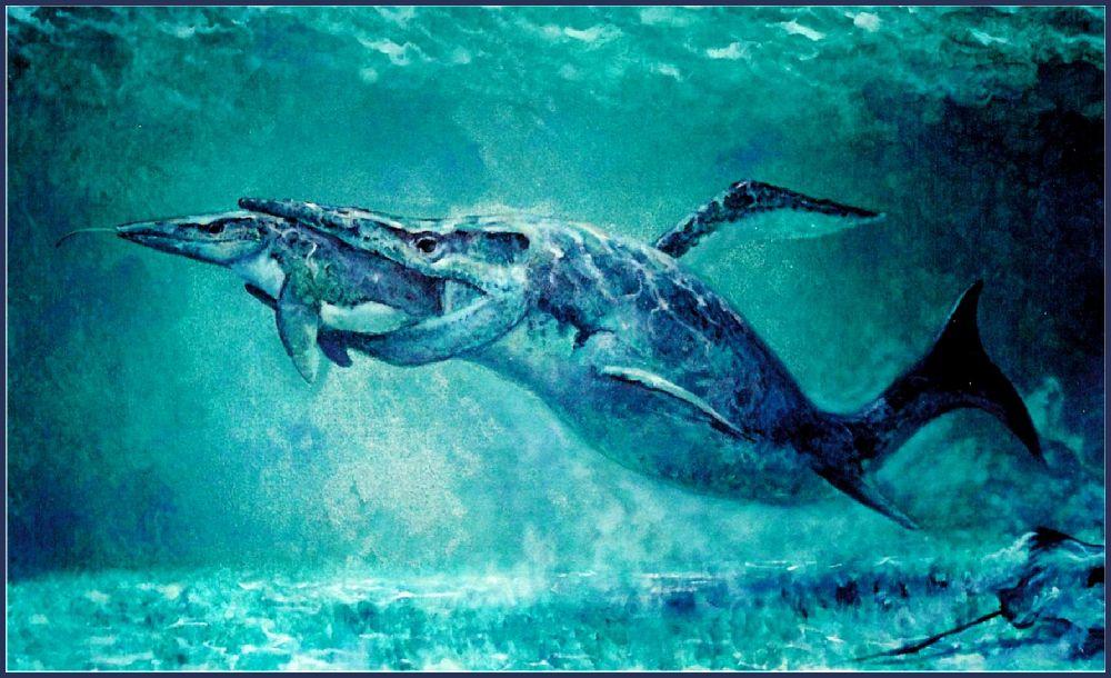 halisaurus dinopedia fandom powered by wikia