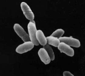 Halobacteria