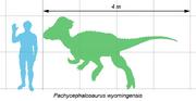 Pachycephalosaurus scale