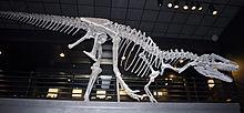 220px-Big Al Allosaurus