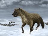 Cave Hyena
