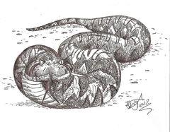 Laophis crotaloides by hodarinundu-d579h7z.jpg