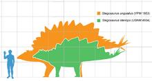 Stegosaurus armatus scale