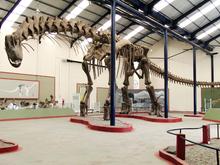 220px-Argentinosaurus skeleton, PLoS ONE