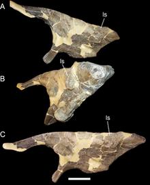 250px-Left ilium of Cedrorestes