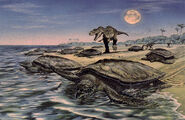 Artists-rendition-of-a-scene-from-a-sea-turtle-nesting-beach