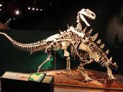 Tuojiangosaurus monolophosaurus