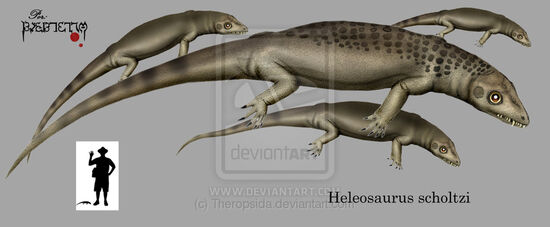 Heleosaurus scholtzi