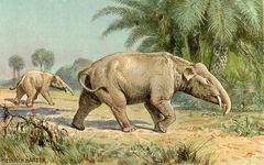 PalaeomastodonIllustration.jpg