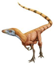 Feathers-sinosauropteryx
