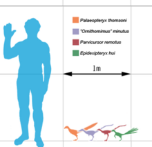 300px-Smallest theropods scale mmartyniuk