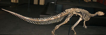 Dryosaurus lettowvorbecki skeleton