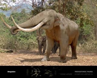Stegodon Dinopedia FANDOM powered by Wikia