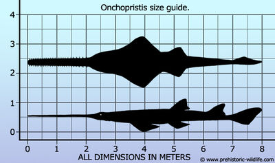 Onchopristis size guide