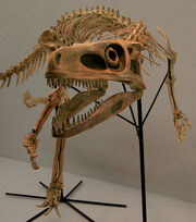 Staurikosaurus-skeleton