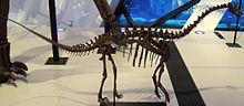 220px-Sauropod juvenile
