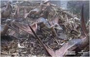 Pteranodon baby