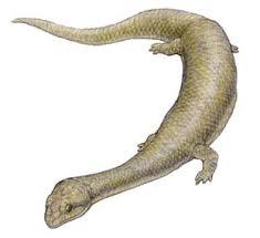 Dolichosaurus