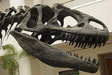 220px-Allosaurus skull SDNHM.jpg