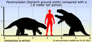 Paramylodon-harlans-ground-sloth-size