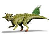 Psittacosaurus/Gallery