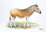 Quagga drawing by Ray Holing