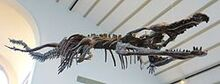 250px-Machimosaurus sp