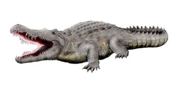 Crocodylus anthropophagus NT