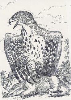 Titanohierax by hodarinundu-d15agt5.jpg