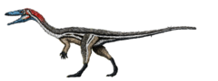 Coelophysis feathers.png