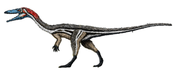 File:Coelophysis feathers.png